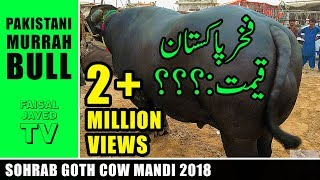 Download lagu PAKISTANI MURRAH BUFFALO | COW MANDI SOHRAB GOTH 2018 KARACHI | Video in URDU/HINDI Mp3