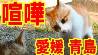 愛媛県の有名な猫島 青島に行ってきました。 本編は後日UPしますが、ま...