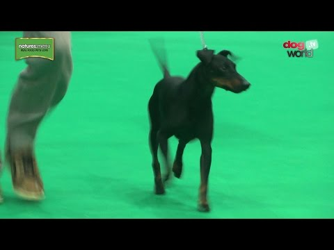 Birmingham National Dog Show 2017 - Terrier group
