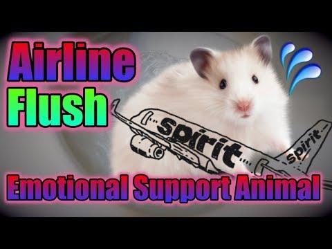 Emotional Support Hamster Flushed!!