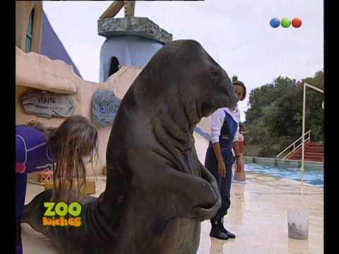 Mundo Marino, Elefante Marino - Zoo Bichos