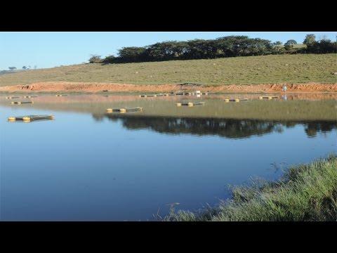 Curso Criação de Tilápias em Tanques-Rede - Tanques de Terra