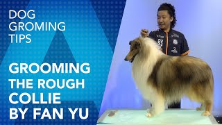 Grooming the Rough Collie By Fan Yu