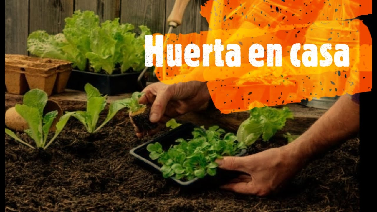 Curso Huerta Organica
