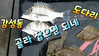 [통영로기] 194회 원투낚시에 감성돔도 나오고, 도다…