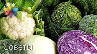 Выбираем капусту. Лучшие советы «Все буде добре» от 13.10.15