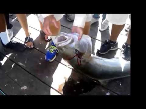 What !!! big fish caught in Imperial Beach Pier, California