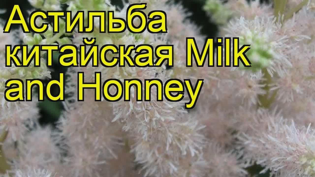 Мед с прополисом купить. Полезные свойства. Интернет магазин меда .