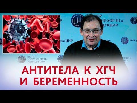 Антитела к ХГЧ. Повышение антител к ХГЧ и беременность. Отвечает Гузов И.И.