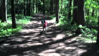 Pawsibilities Training - Toronto Dog Training