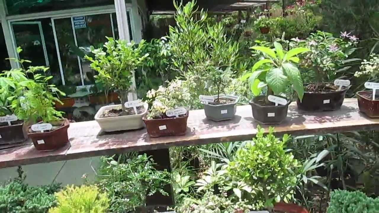 Jard n japon s plantas youtube - Plantas jardin japones ...