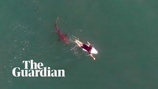 Shark circles world championship surfer in Australia in astonishing near-miss