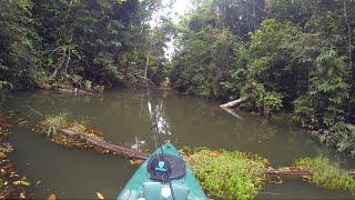 Pesca de TRAÍRA, ataques cinematográficos na isca de superfície!