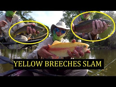 How To Catch Trout On Yellow Breeches Creek= Browns, Rainbows And Palomino - Late Summer Float