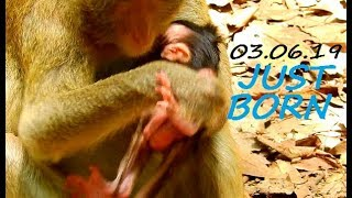 NEW NEW NEW | Congrats Mom Ogy Of Mila Group Have A Birth Cute Baby Newborn | Baby So Cute.