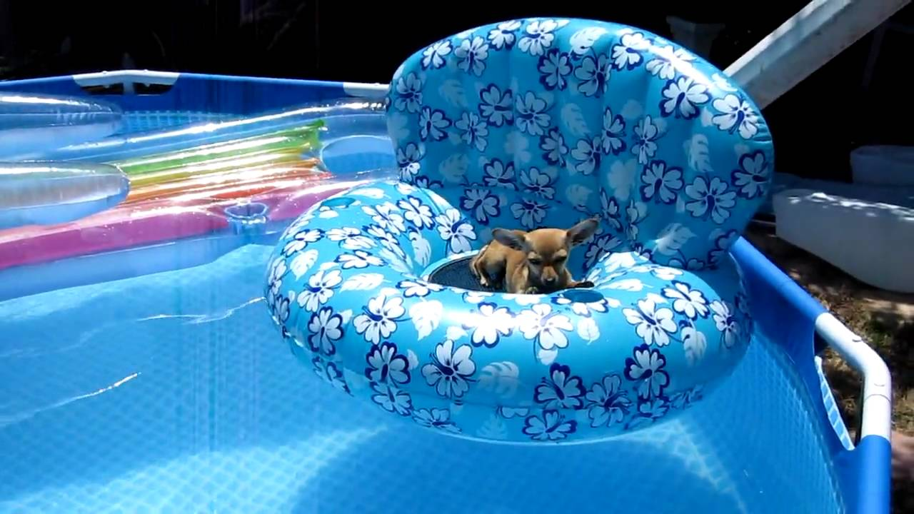 Chihuahua On The Pool Float Mov Youtube