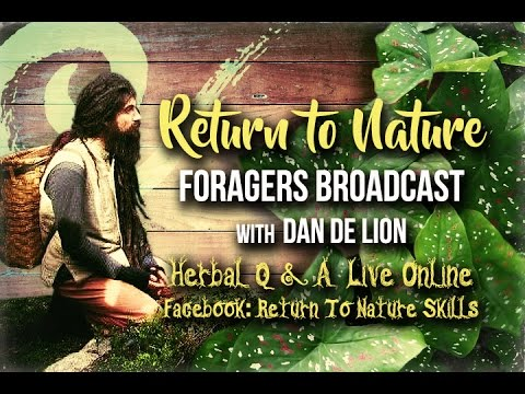 Foragers Broadcast Herbal Q+A Preview - Cold and Flu Discussion