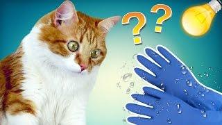 видео Как избавиться от кошачьей шерсти