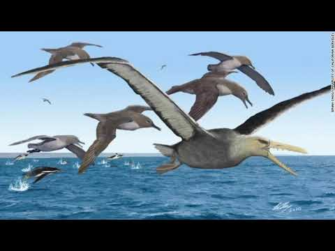 Antarctic Fossil Could Have Been The Biggest Flying Bird Ever, Study Finds