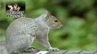 Mission Impossible Funny SQUIRREL