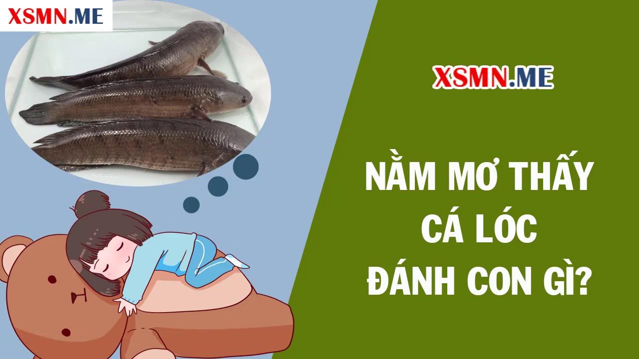 Nằm mơ thấy cá lóc đánh con gì? – Giải mã giấc mơ thấy cá lóc