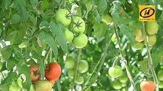Александр Лукашенко потребовал обеспечить магазины и рынки доступными овощами