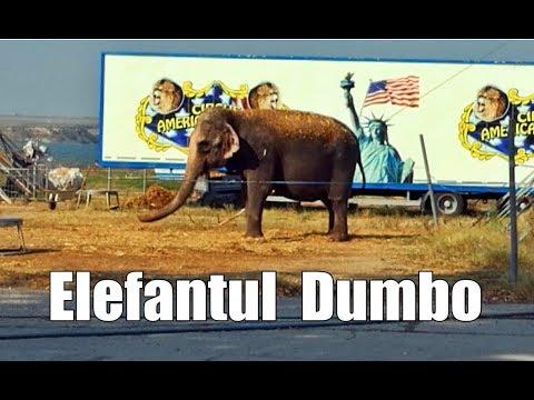 Elephant Dumbo, is one of the oldest elephants in Romania