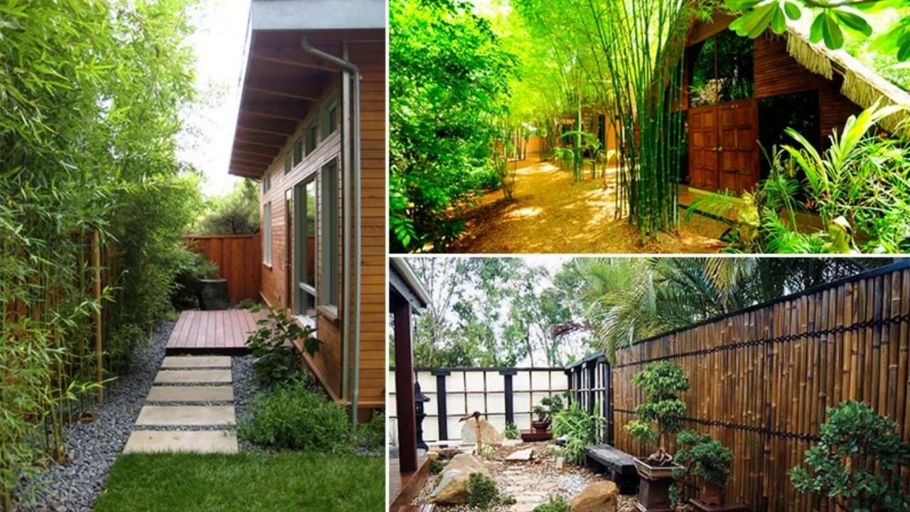 Bamboo ideas for Backyard - YouTube