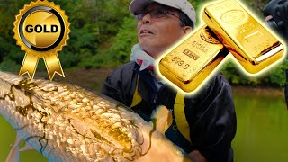 This pure Golden Koi is fabulous | Last episode from Japan
