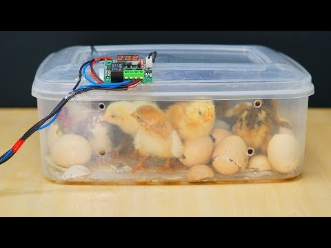 How to make a mini Egg Incubator at home   || Hatched-Result ||