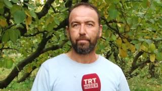 TRT Haber Geyve Ayvası Çekimleri-Geyvemedya.com