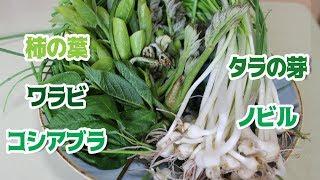 Gambar cover 前編 里山探検!!うまい山菜を求めて