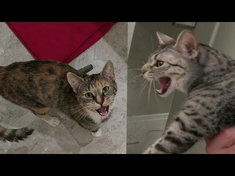 NEW CAT INTRUDER
