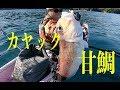 カヤックからのアマダイ釣り の動画、YouTube動画。
