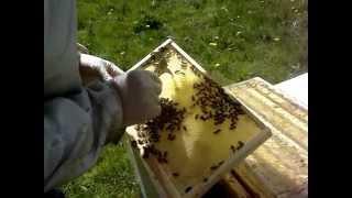 Пчеловодство в Англии.История одного улья 4.(Это видео создано с помощью видеоредактора YouTube (http://www.youtube.com/editor), 2015-04-30T13:20:08.000Z)