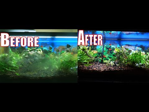 How To Get Rid Of All Types Of Algae In SECONDS In Your Aquarium!