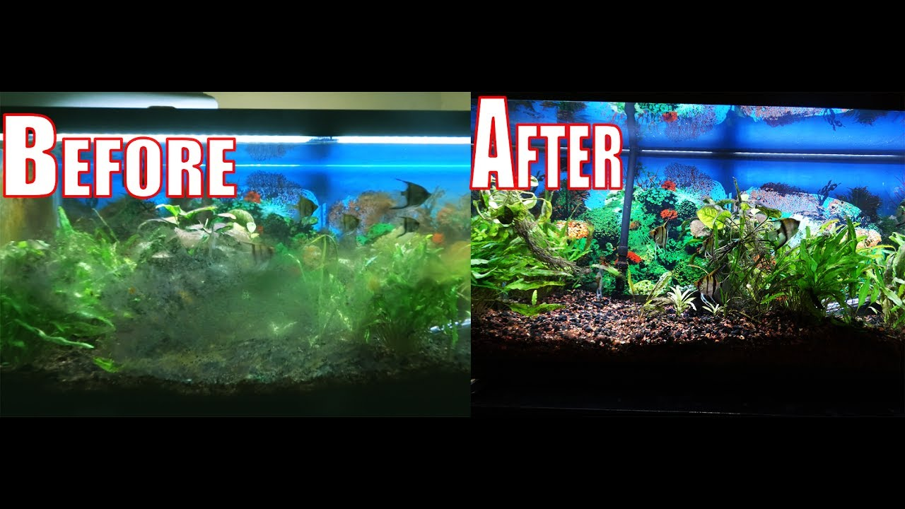 How to get rid of all types of algae in seconds in your for What causes algae in fish tanks