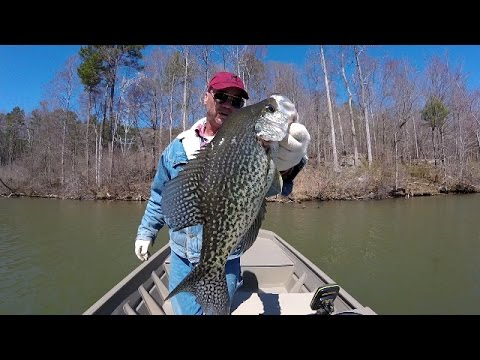 Crappie Fishing During A Cold Front - Lake Guntersville