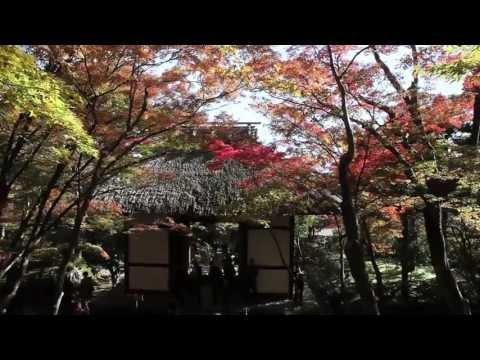 JAPAN - Beautiful Four Seasons - 【美しい日本の四季】