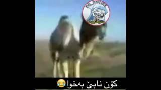 Funny kurdish Xoshtrin videokani instagram bashi (2) خۆشترین ڤیدیۆکانی ئینستاگرام بەشی