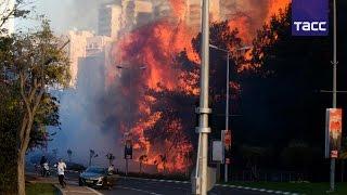 В Израиле бушуют лесные пожары, десятки тысяч людей эвакуированы(В Израиле бушуют лесные пожары, десятки тысяч людей эвакуированы. Несколько новых очагов природных пожаро..., 2016-11-25T08:36:02.000Z)