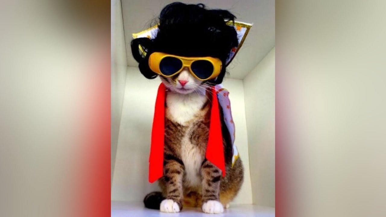 CATS TRY ON HALLOWEEN COSTUMES , Funny Cats in Costumes Compilation