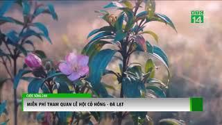 Miễn phí tham quan lễ hội cỏ hồng Lang Biang, Đà Lạt | VTC14