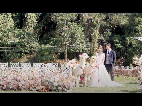 與羊駝在有機農莊舉行婚禮