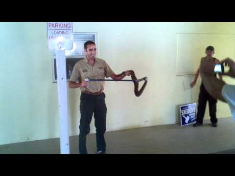 Eastern Diamondback Rattlesnake Removal
