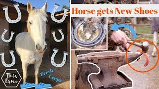 Horse gets New Shoes! | How Farriers shoe horses | This Esme