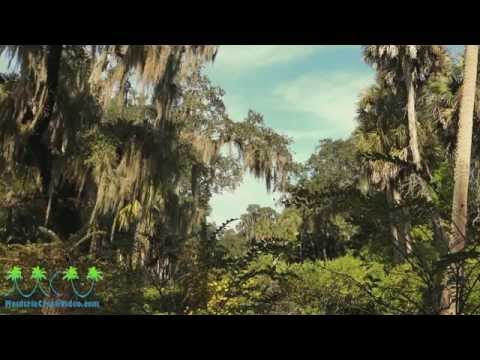 Washington Oak Gardens State  Park. Palm Coast. Florida