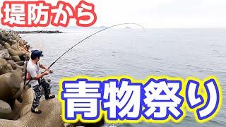 夏の堤防で青物が大爆釣!!○○が最強すぎた…【ルアー釣り】