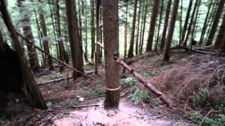 rolling a tree off the stump using an improvised cant-hook
