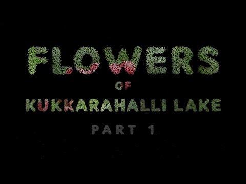 Flowers of Kukkarahalli lake Part 1   Flora of kukkarahalli kere   mysore   mysuru
